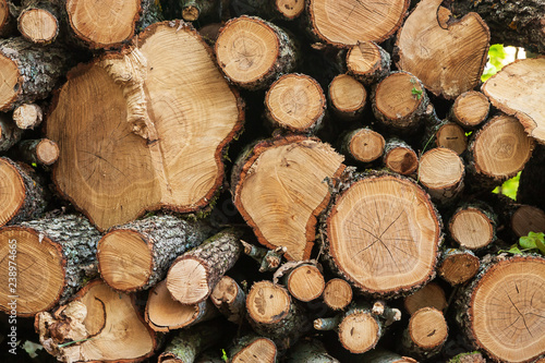 Photographie  Full frame view of cut logs in a pile.
