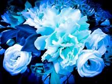 青い薔薇1