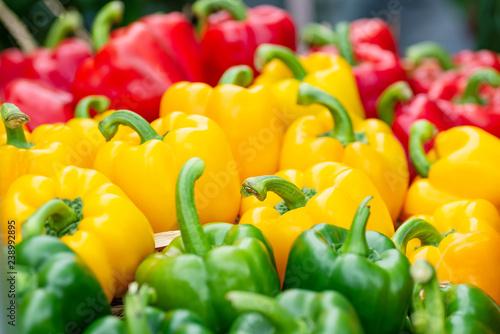 Fototapeta  Colorful bell peppers at organic vegetable market