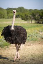 Portrait Of A Large Bird Feedi...