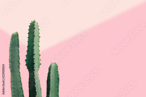 Foto op Canvas Cactus Green cactus on a pastel pink background with copy space