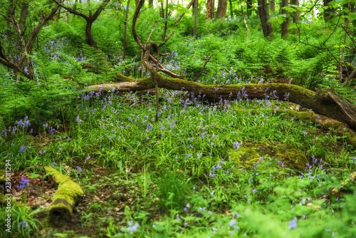 Fotografie, Obraz Green primeval forest