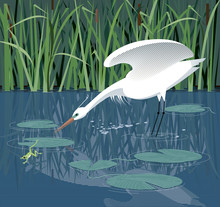 White Heron Hunts In The Reeds