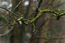 Moss Tree Branch