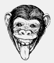 Sketch Of A Monkey Head. Chimp...