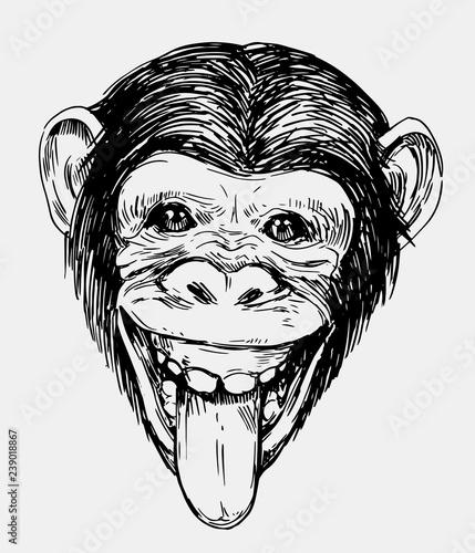 Naklejka premium Szkic głowy małpy. Szympans. Ręcznie rysowane szkic przekonwertowany na wektor
