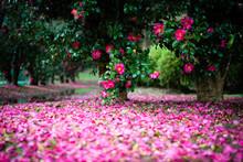 花と水溜りと小道