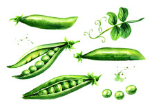 Green Peas Set, Watercolor Hand Drawn Illustration  Isolated On White Background