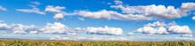 Panorama De Grand Ciel Bleu Et Nuages Au-dessus Des Vignes