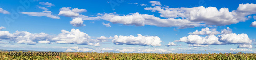 Obraz na płótnie Panorama de grand ciel bleu et nuages au-dessus des vignes