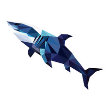 Colorful Polygonal Style Design Of Blue Shark