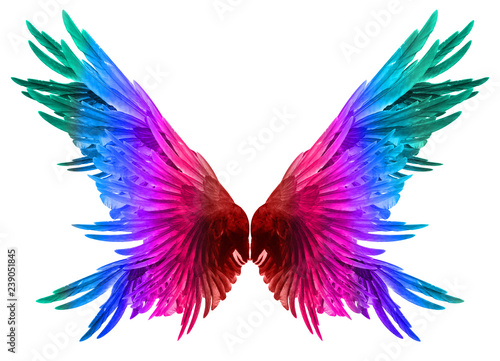 Foto  wings on a white background.