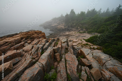 Fotografie, Obraz  The rugged granite coast of Acadia National Park, Maine, on a foggy summer morning