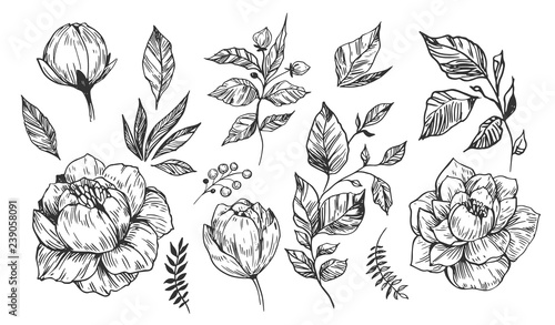 Set of peonies with leaves. Floral elements for design. Vector. Isolated