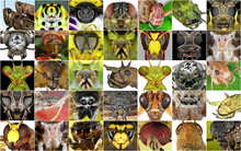 Insects Closeup. Collage Of Insect Portraits