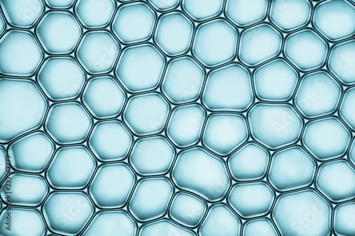 Cells division process, Cell divides into two cells Fototapet