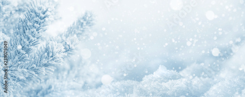 Blanc Winter background. Christmas background with snow-covered pine branch and snowdrifts