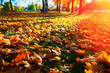 Yellow autumn park lawn landscape background