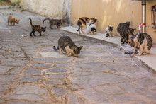 Crowd Street Cats In Narrow Outdoor South Urban Environment Without People