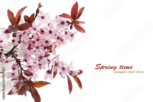 Valokuva  Sprig of blossoming cherry plums isolated on a white background