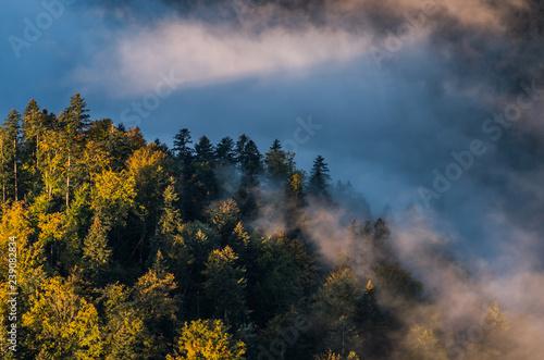 rano-mgly-i-kolorowy-krajobraz-lasu-jesienia-w-gorach