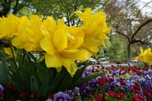 Flowers Park At Geneva Lake