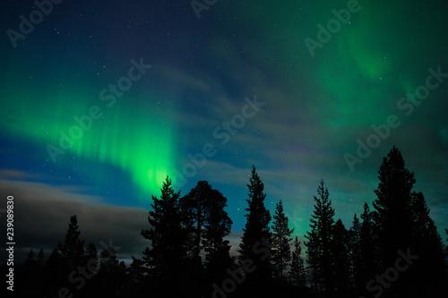 Fotografia, Obraz  Aurora Borealis above boreal forest in Finnish Lapland.