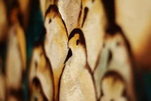 Oil Painting Of Sea Birds