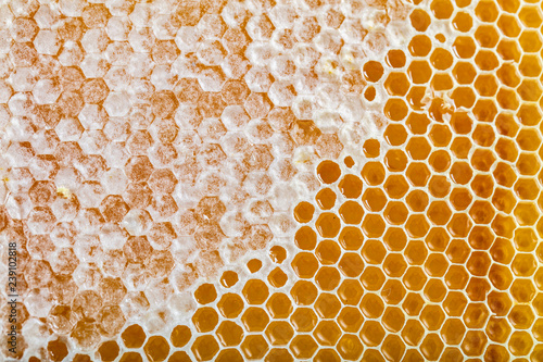 Sweet honeycomb isolated on white, bee products by organic natural ingredients concept Canvas Print