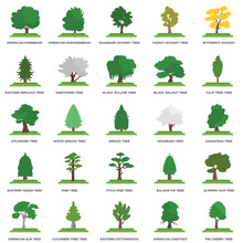 Simple Set Of 25 Vector Icon. Contains Such Icons As Sassafras Tree, Eastern Cottonwood Cucumber Tree Sycamore Spruce Tree. Editable Stroke Pixel Perfect