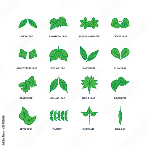 Set Of 16 icons such as Acicular, Cuspicate, Pinnate, Apple leaf Wallpaper Mural