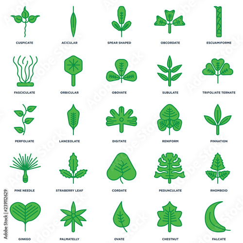 Photo Set Of 25 icons such as Falcate, Chestnut, Ovate, Palmatelly, Ginkgo, Trifoliate