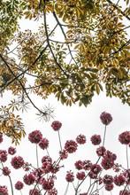 Flowers Meet The Trees