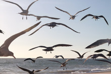 Bird Flocking Takeoff
