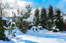 Beautiful Winter Snowy Garden ...