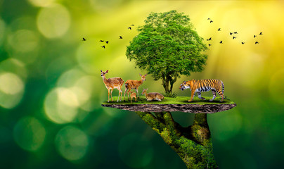 FototapetaConcept Nature reserve conserve Wildlife reserve tiger Deer Global warming Food Loaf Ecology Human hands protecting the wild and wild animals tigers deer, trees in the hands green background Sun light