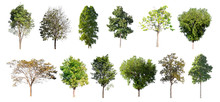 Collection Tree Isolate On White Background