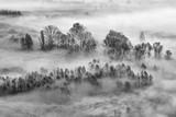Czarny i biały krajobraz na lesie z mgłą, Włochy - 239130048