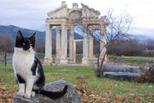 A Cat In Front Of Tetrapylon O...