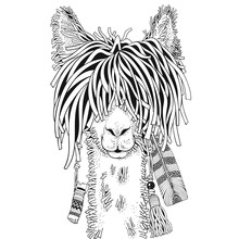 Coloring Book Page For Adult And Children. Llama In Zentangle Style. Black And White Monochrome Background. Doodle Hand-drawn.