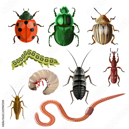 Canvas-taulu Set of different insects