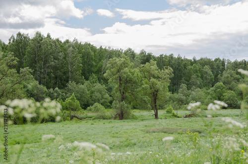 Fotobehang Olijf rural landscape