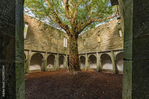 Muckross Abbey in the Killarney National Park Canvas Print