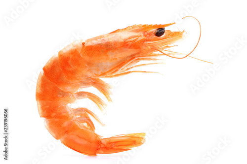 Shrimp on white background
