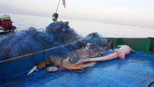 Fish Shark Caught Fish Net On Boat