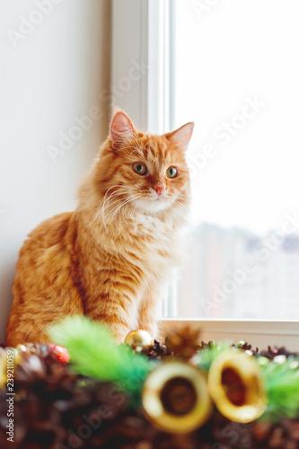 Fotografía  Cute ginger cat sitting on window sill near handmade Christmas wreath