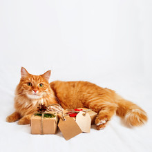 Cute Ginger Cat With Stack Of Christmas Presents. New Year Gifts Are Wrapped In Craft Paper And Have Clear Tags For Your Text.