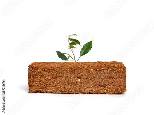 Sprout grows on coconut fiber. Compressed bale of ground coconut shell fibers (coir), surface background