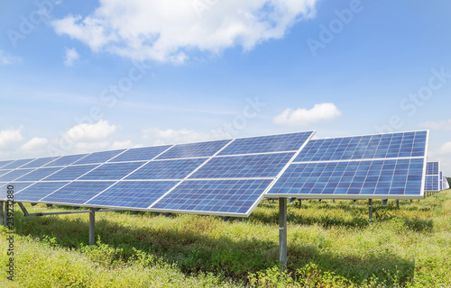 rows array of solar cells or photovoltaics in solar power station alternative cl Wallpaper Mural