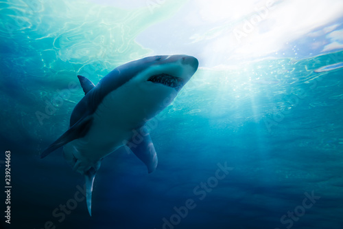 Great white shark swimming underwater Tablou Canvas